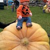 "1st place Pumpkinfest 2014 - Photographer: Andrea Burrell ""I have found the giant pumpkin!"""